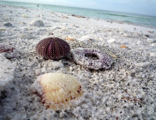 3 Outdoor Activities to Enjoy in Longboat Key, FL