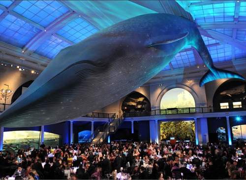 This image has an empty alt attribute; its file name is AMNH-500x367.jpg