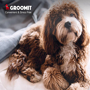 GROOMIT, On-Demand Pet Grooming