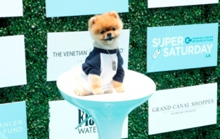 Jiff the Pomeranian at Ovarian Cancer Research Fund's 2nd Annual Super Saturday LA