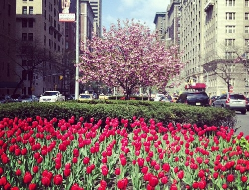 Socially Superlative Round-Up: What To Do in May in NYC